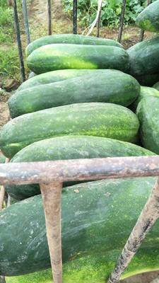 这是一张关于黑皮冬瓜 15斤以上 黑皮的产品图片