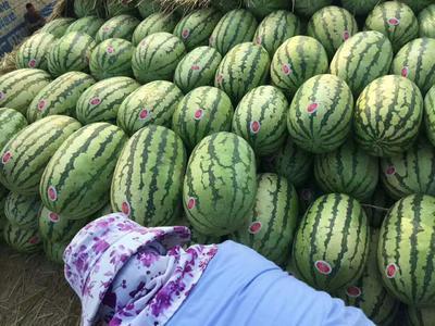 这是一张关于硒砂瓜 无籽 1茬 8成熟 8斤打底的产品图片