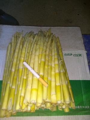 这是一张关于山竹笋 25~30cm 鲜笋的产品图片