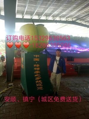 贵州省安顺市镇宁布依族苗族自治县蜂糖李 35 - 40mm