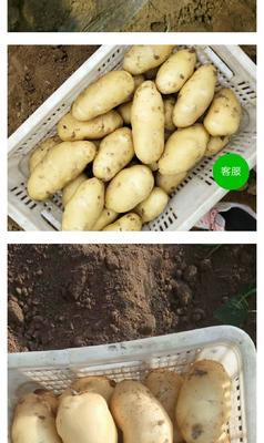 山东省临沂市沂南县荷兰15号土豆 2两以上