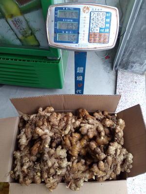 广东省清远市连州市小黄姜 带土 2两以上