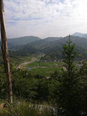 贵州省黔东南苗族侗族自治州黎平县大叶樟