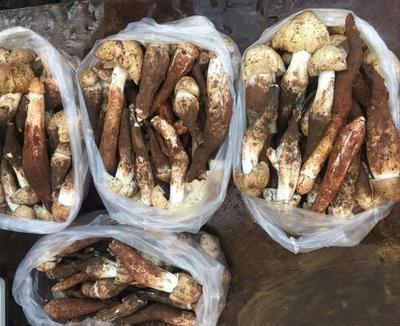 这是一张关于野生鸡枞菌的产品图片