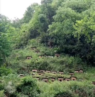 甘肃省临夏回族自治州康乐县土蜂蜜 玻璃瓶装 95%以上 2年以上