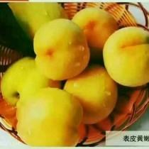湖南省长沙市宁乡县锦绣黄桃 60mm以上 4两以上