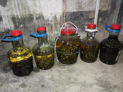广东省江门市台山市马蜂