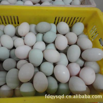 四川省广安市广安区麻鸭蛋 食用 箱装