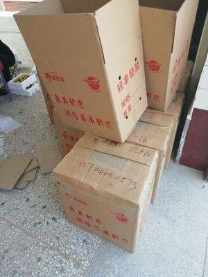 这是一张关于大荔冬枣 直口 20-30g的产品图片
