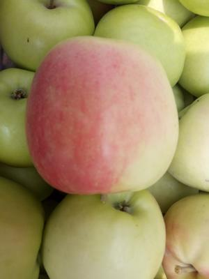 陕西省渭南市大荔县晨阳苹果 光果 条红 60mm以上