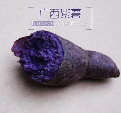 广西壮族自治区北海市海城区富硒紫薯 2两以下