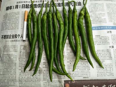 四川省绵阳市三台县二荆条辣椒 15~20cm 靑色 中辣
