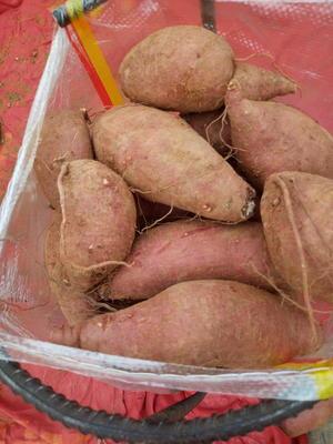 这是一张关于济薯26号红薯 红皮 3两以上的产品图片