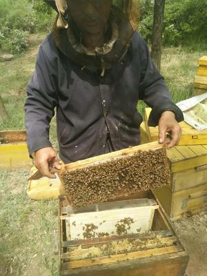 这是一张关于洋槐蜂蜜 塑料瓶装 100% 2年以上的产品图片
