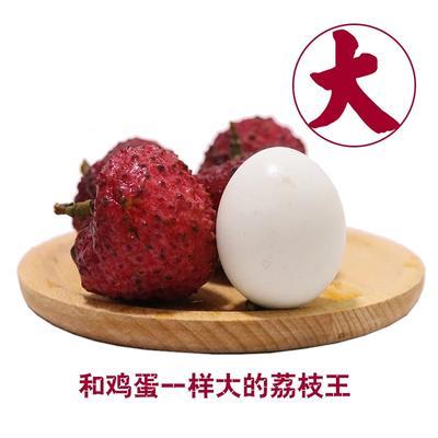 福建省漳州市漳浦县荔枝王 1.5cm