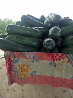 这是一张关于黑皮冬瓜 30斤以上 黑皮的产品图片