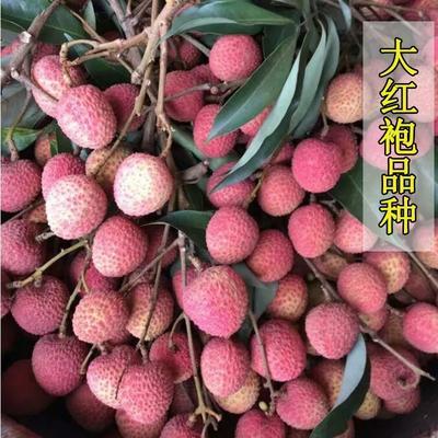 四川省泸州市合江县妃子笑荔枝 1.5cm
