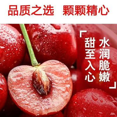 陕西省西安市灞桥区白鹿原樱桃 20mm以上 18-20g