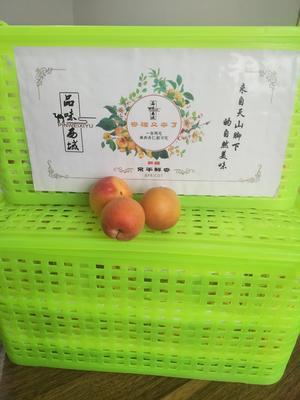 新疆维吾尔自治区阿克苏地区温宿县胭脂杏 30-40mm