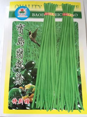 河南省郑州市金水区豆角种子 ≥98%