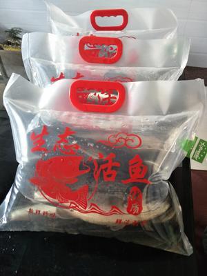 江苏省盐城市东台市加州鲈鱼 人工养殖 0.5公斤以下