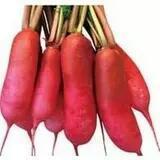 山东省临沂市兰陵县红皮萝卜 0.2~1斤