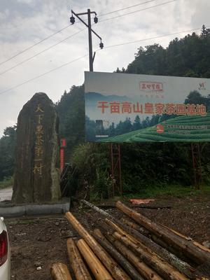 湖南省益阳市安化县安化黑茶 散装 一级