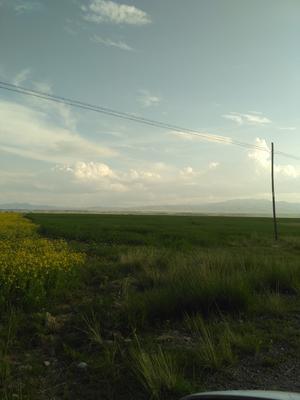 青海省海南藏族自治州共和县白青稞