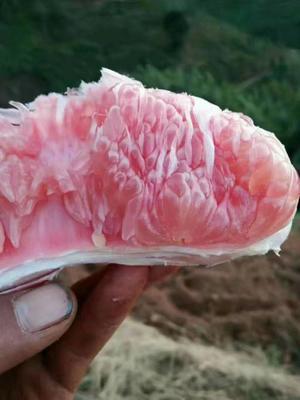 云南省丽江市华坪县三红蜜柚苗