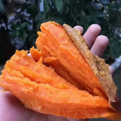 六鳌地瓜 【优选】六鳌红蜜薯大果净重5斤装包邮