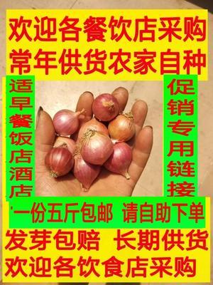 广东省惠州市博罗县红皮大葱头