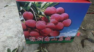 广东省深圳市宝安区桂味荔枝 2cm