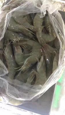 河南省周口市川汇区冻虾