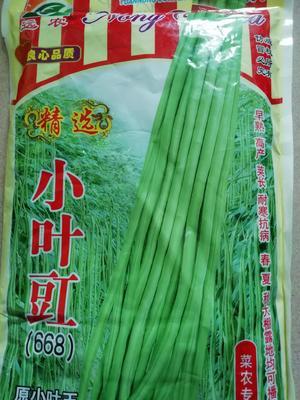 湖北省黄冈市英山县豆角种子 ≥95%
