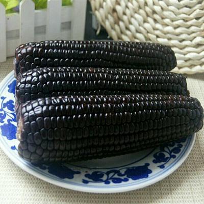 海南省海口市美兰区玉米种子
