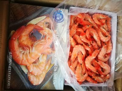 上海宝山区越南对虾 野生 9钱以上