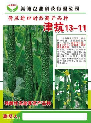 山东省潍坊市寿光市黄瓜种苗