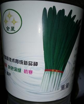 河北省沧州市肃宁县韭菜种子