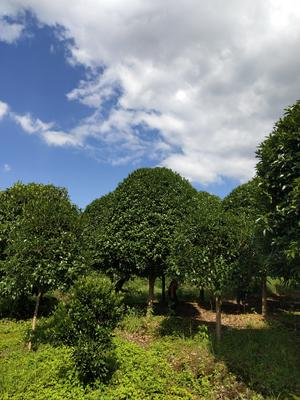 广西壮族自治区桂林市全州县金桂