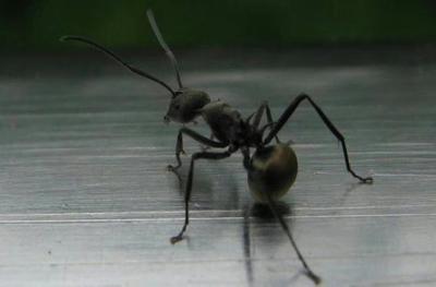 广西壮族自治区桂林市兴安县蚂蚁