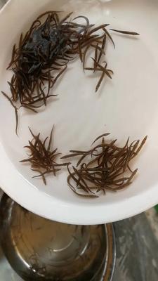 广东省广州市花都区刺鳅鱼苗