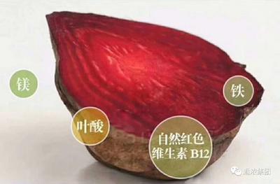 陕西省咸阳市泾阳县甜菜根 30~40cm