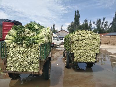 宁夏回族自治区固原市西吉县宁夏西芹 55~60cm 露天种植 0.5斤以下