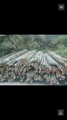 云南省红河哈尼族彝族自治州个旧市楠竹