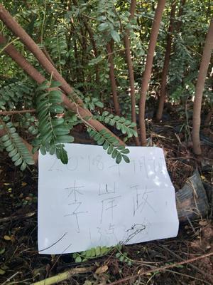 云南省昆明市官渡区清香木