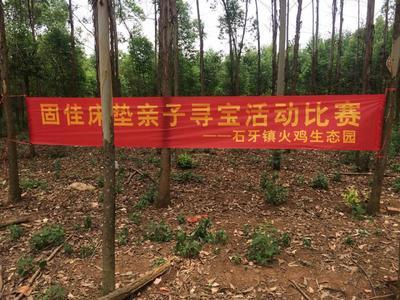 广西壮族自治区来宾市兴宾区贝蒂纳火鸡 10-15斤