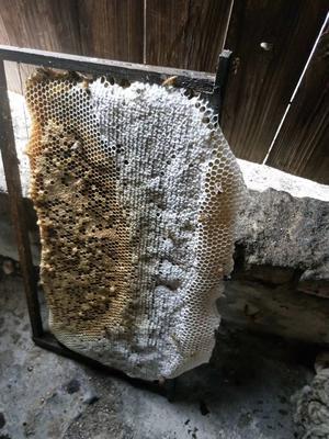 福建省泉州市安溪县土蜂蜜 玻璃瓶装 100% 2年以上