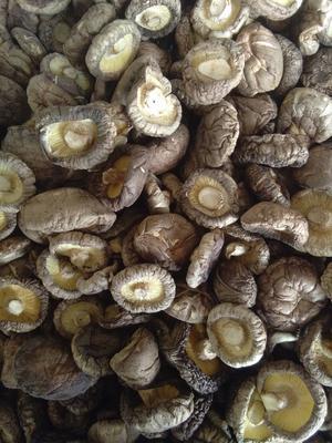 河南省南阳市镇平县剪柄香菇 散装 1年以上