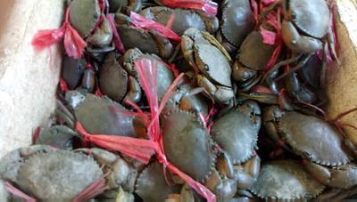 云南省德宏傣族景颇族自治州芒市生态大闸蟹 2.5-3.0两 公蟹