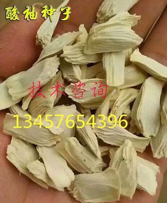 广西壮族自治区桂林市阳朔县酸柚直生苗